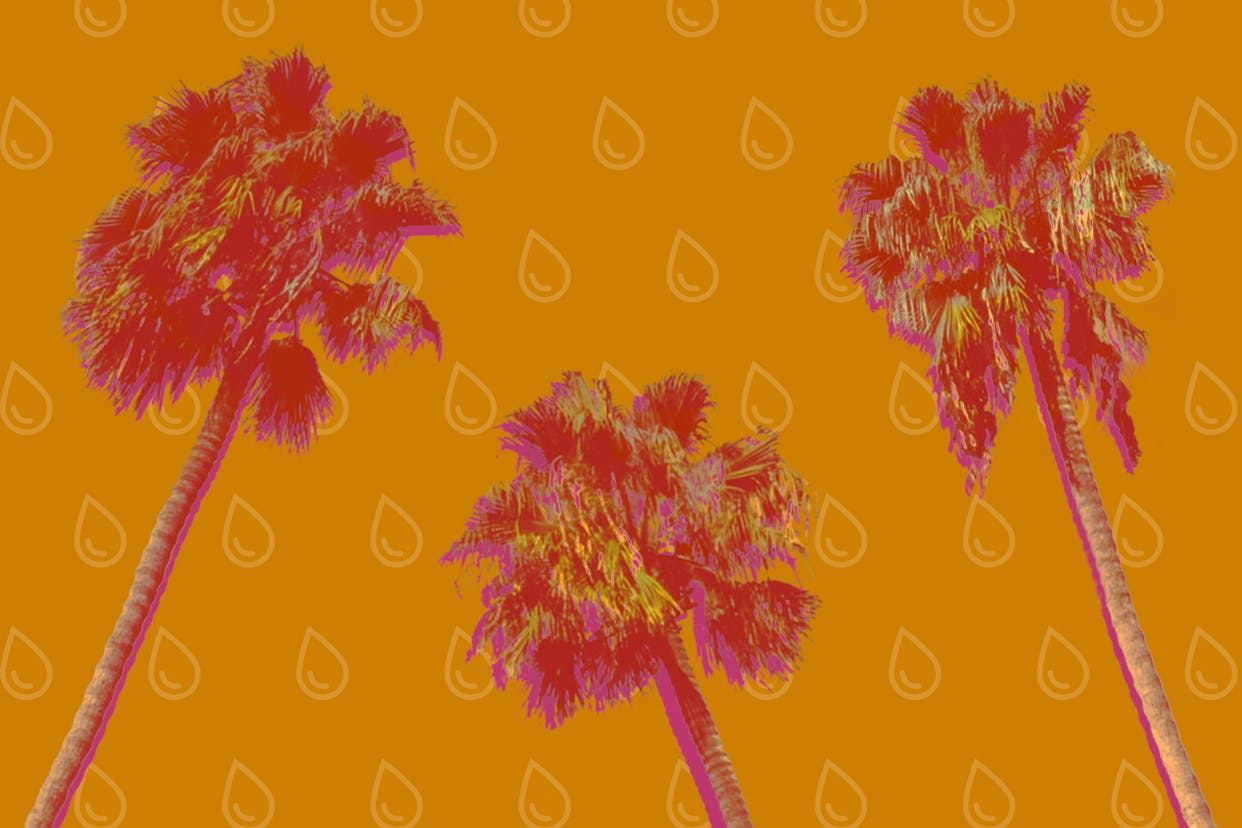 Palm trees on a orange sweat background