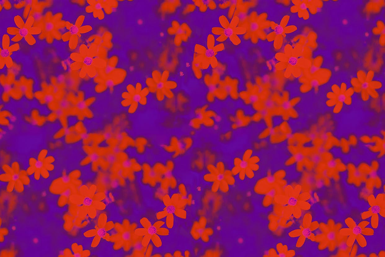 Red flowers on a purple background